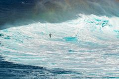 MAUI, HAWAII, USA - DECEMBER 15, 2013: Unknown surfer is riding. A big wave at Jaws Royalty Free Stock Image