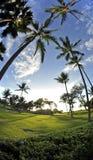 Maui Palms Royalty Free Stock Photos