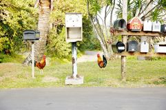 Maui rural  mailboxes and wild chickens Stock Image