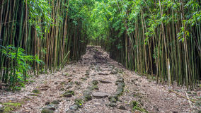 Maui's Bamboo Forest. One of my favourite hike on the tropical island of Maui, Hawaii. The walk to Waimoku Falls through the Bamboo forest is magical. Its very royalty free stock photography