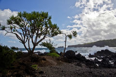 Maui's Jagged Coastline Stock Image