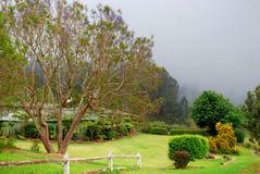 Maui scenico - alberi del Jacaranda Immagini Stock
