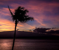 Maui sunrise. The sun rises above the sea on a beautiful Maui morning Stock Photo