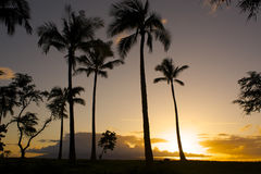 Maui sunset. A Maui sunset with trees in the foreground Stock Image