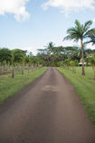 Maui Tropical Plantation Stock Image