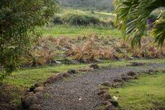 Maui Tropical Plantation Stock Photos