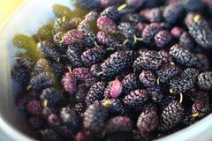 maulbeere Frische reife Maulbeernahaufnahme Organischer schwarze Maulbeerhintergrund Landwirtschaft, arbeitend im Garten lizenzfreies stockfoto