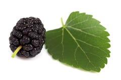 Maulbeere und grünes Blatt Lizenzfreies Stockfoto