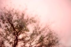 Maulbeerebaum im Nebel Stockfotos