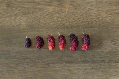 Maulbeeren gelegt in kleines zum Großauftrag Stockfoto