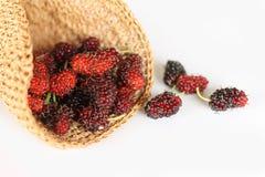 Maulbeerfrucht Stockbild