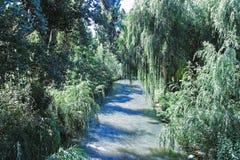 Maule河,智利 免版税库存图片