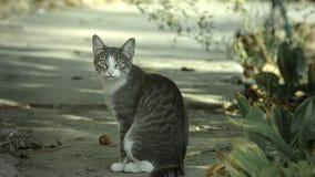 Maullidos del gato que miran la cámara metrajes