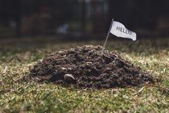 Maulwurfshügel im Garten, Tiertätigkeit im Garten Stockfotografie