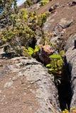 Mauna Ulu Eruption Trail Stock Photography