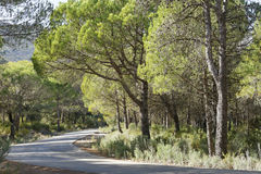 Mauntain road trees Royalty Free Stock Photo