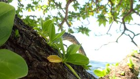Maupiti island , green vegetation on the beach of bora French Polynesia royalty free stock image