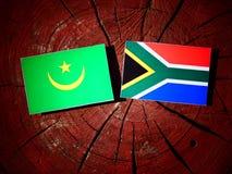 Mauretania flaga z południe - afrykanin flaga na drzewnym fiszorku odizolowywającym Obraz Royalty Free