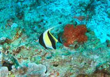 Maurisches Idol der Fische stockbilder