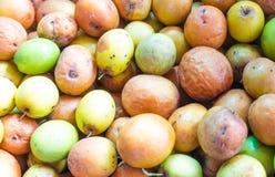 Mauritiana do Ziziphus, igualmente conhecido como jujubas Foto de Stock Royalty Free