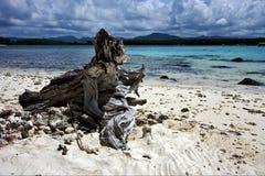 mauritius beach Stock Image