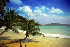Mauritius beach. Sand palms sky stock image