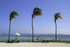 Mauritius Beach Scene. Some lounge chairs at the beach of Tamssa Resort at Mautitius Stock Photography