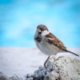Mauritius Bird était perché sur le corail image libre de droits