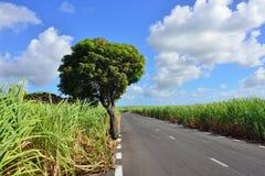 Mauritius island royalty free stock photo