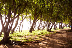 Mauritius island nature Stock Photography