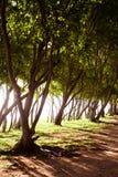 Mauritius island nature Stock Image