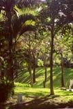 Mauritius island nature Royalty Free Stock Images