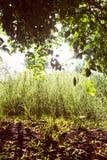 Mauritius island nature Stock Photos