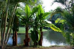 mauritius Jardín botánico de Pamplemousses Foto de archivo libre de regalías