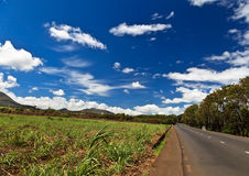 Mauritius landscape Stock Images