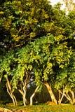 Mauritius nature landscape Stock Photography