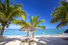 Mauritius palm beach Stock Image