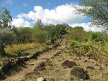 Mauritius pathway. Pathway up a hill between exotic plants on Mauritius island, Indian Ocean Stock Photo