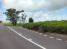 Mauritius. The road among green tea fields. Royalty Free Stock Images
