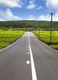 Mauritius. The road among green tea fields Stock Photos