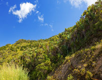 Mauritius. Tropical plants in sunny day Royalty Free Stock Images