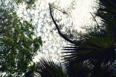 mauritius Vista del cielo in mezzo agli alberi fotografia stock libera da diritti