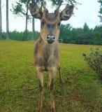 Mauritius wildlife Stock Photo