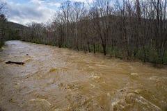 Maury River na fase da inundação que inunda áreas de encontro do ponto baixo Fotografia de Stock Royalty Free