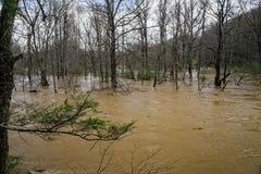 Maury River på att översvämma liggande områden för bottenläge royaltyfri foto
