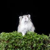Maus auf Anlage Stockfotografie