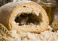 Maus in einem Laib lizenzfreie stockfotos