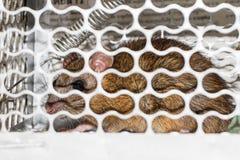 Maus in einer Livefangfalle Lizenzfreies Stockbild