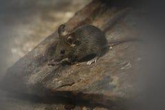 Maus im Garten lizenzfreie stockbilder