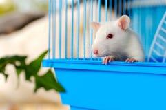 Maus im Haus Stockbild